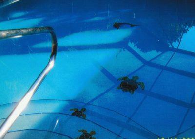 Pool with Turtles on Steps